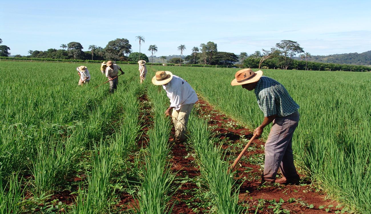 Vitória da agricultura familiar: Senado aprova PL 735