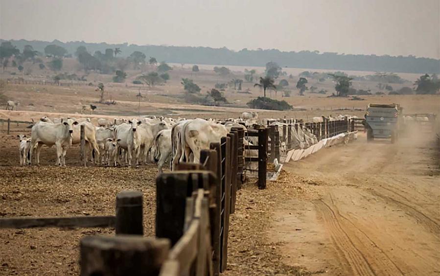 Ruralistas se articulam para obter perdão bilionário das dívidas do Funrural